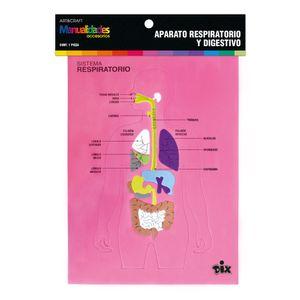 Aparato Respiratorio Y Digestivo De Foamy ART&CRAFT